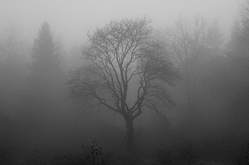 drzewo za mgłą