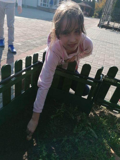 dzieci sadzą żonkile na polach nadziei przed budynkiem szkoły