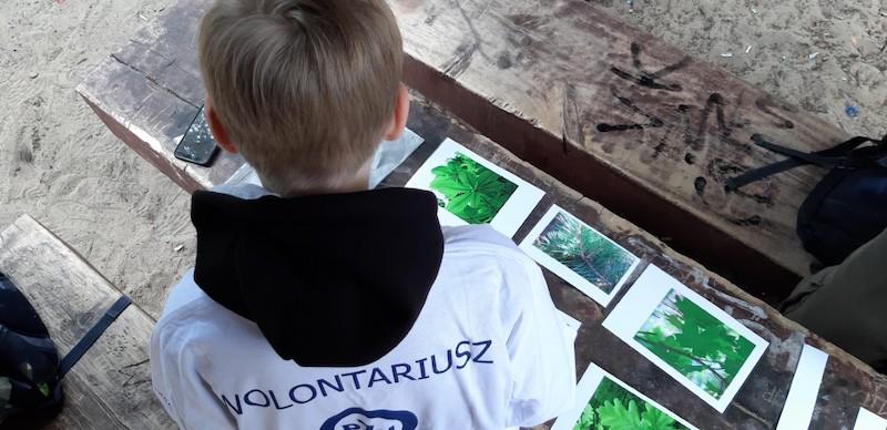 wolontariusz Fundacji PZU patrzy na rozłożone zdjęcia liści