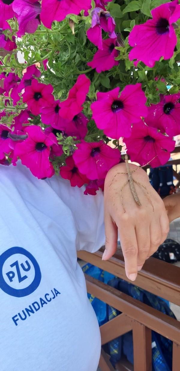 wolontariusz PZU trzyma na ręku patyczaka