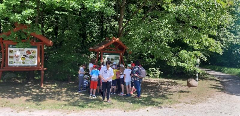 dzieci stoją w lesie słuchając leśniczego